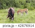 馬 まきば 牧草地の写真 42676914