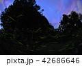 蛍 光 昆虫の写真 42686646