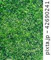 Grass closeup tecture 42690241
