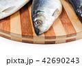 close up of fish head 42690243