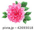 花 薔薇 水彩のイラスト 42693018