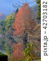 湖 紅葉 八千代湖の写真 42703182
