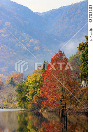 八千代湖の紅葉 土師ダム 42703183