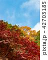 紅葉 秋 植物の写真 42703185