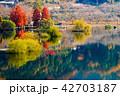 湖 紅葉 八千代湖の写真 42703187