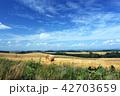 北海道 美瑛 風景の写真 42703659
