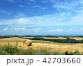 北海道 美瑛 風景の写真 42703660