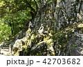 永源寺 初夏 新緑の写真 42703682