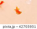 頂天眼 金魚 魚の写真 42703931