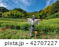 奈良県 明日香 初秋の里山 彼岸花と田んぼ 案山子ロード 42707227