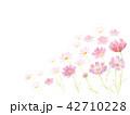 コスモス畑 水彩イラスト 42710228