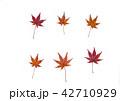 紅葉の落ち葉 42710929
