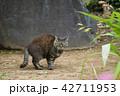 猫 野良猫 動物の写真 42711953