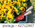 お花 フラワー 咲く花の写真 42712907