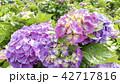 絵 絵画 写真の写真 42717816