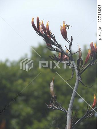 青空にニューサイランオレンジ色の花 42718893