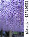 藤 花 植物の写真 42719553