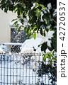 粉雪が落ちる 42720537