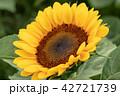 向日葵 ひまわり 花の写真 42721739