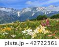 岩岳 ゆり園 42722361