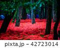 (埼玉県日高市)巾着田のヒガンバナ 42723014