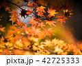 楓 秋 もみじの写真 42725333