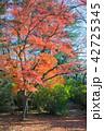 楓 秋 落葉の写真 42725345