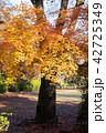 楓 秋 落葉の写真 42725349