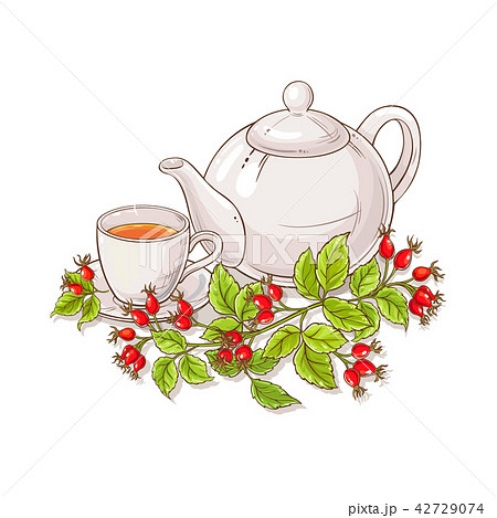 wild rose tea illustration 42729074