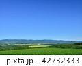 美瑛 畑 風景の写真 42732333