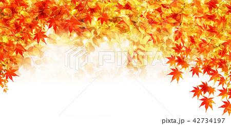 紅葉 もみじ 秋 背景  42734197