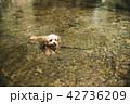 犬 ペット 川の写真 42736209