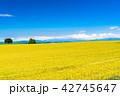 美瑛 畑 自然の写真 42745647