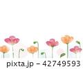 ポピー 花 芥子のイラスト 42749593