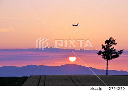 北海道 夕日と飛行機と大地 42764220