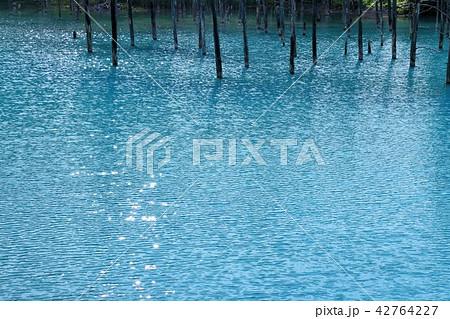 北海道 美瑛 青い池 42764227