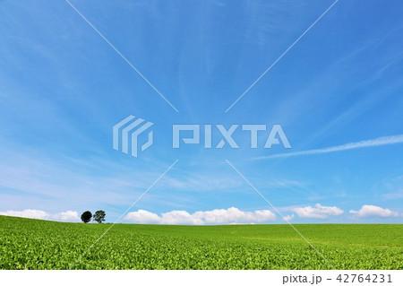 北海道 夏の青空と大地 そして親子の木 42764231