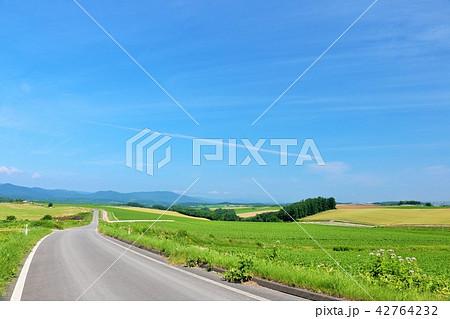 北海道 青空の大地と道 42764232