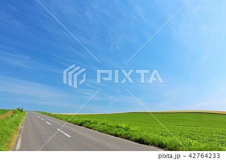 北海道 青空の大地と一本道 42764233