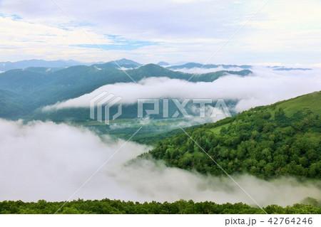 北海道 トマムの雲海 42764246