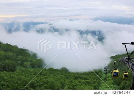 北海道 トマムの雲海 42764247