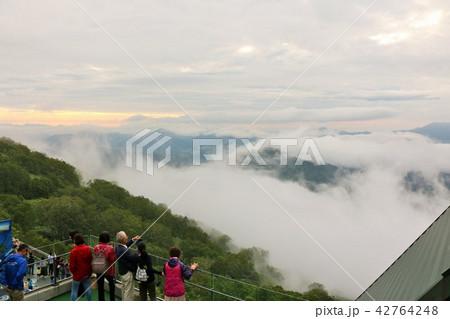 北海道 トマムの雲海 42764248