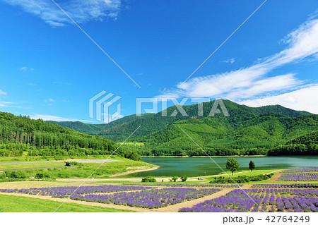北海道 夏の青空とラベンダー畑 42764249