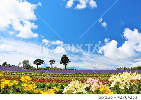 北海道 青空の花畑 42764253