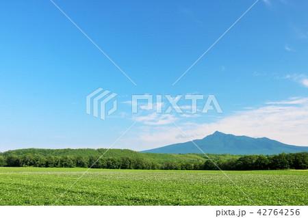 北海道 青空のジャガイモ畑と斜里岳 42764256