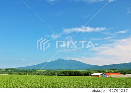 北海道 青空の大地と斜里岳 42764257