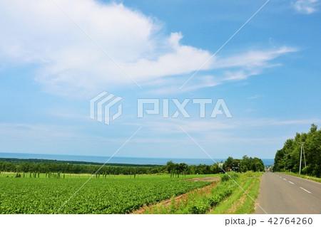 北海道 青空の大地とオホーツク海 42764260