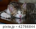 猫 子猫 動物の写真 42766844