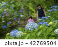 紫陽花と親子 42769504