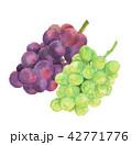 2種類のぶどう オーロラブラック シャインマスカット 42771776